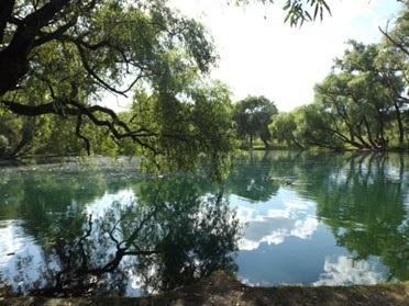 Michoacán cuida la biodiversidad con 65 áreas de preservación natural: Semaccdet